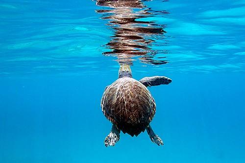 Segundas oportunidades para la tortuga marina