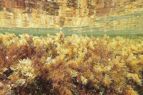 Qualitat aigües de Menorca