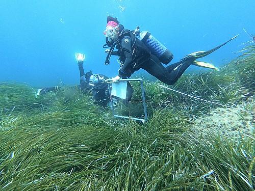 Ampliamos la comunidad de Observadores del Mar