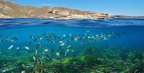 Marilles Fundation - Áreas marinas protegidas: donde las especies renacen