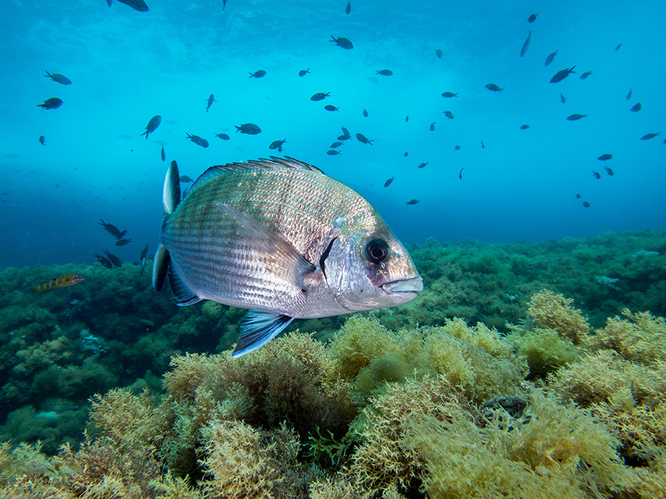 The impact of marine reserves in the Balearics