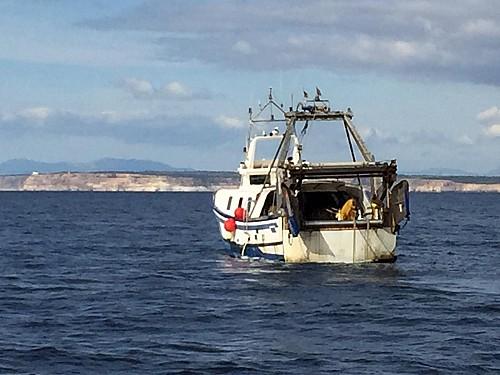 Baleares pierde otra oportunidad de liderar en pesca sostenible