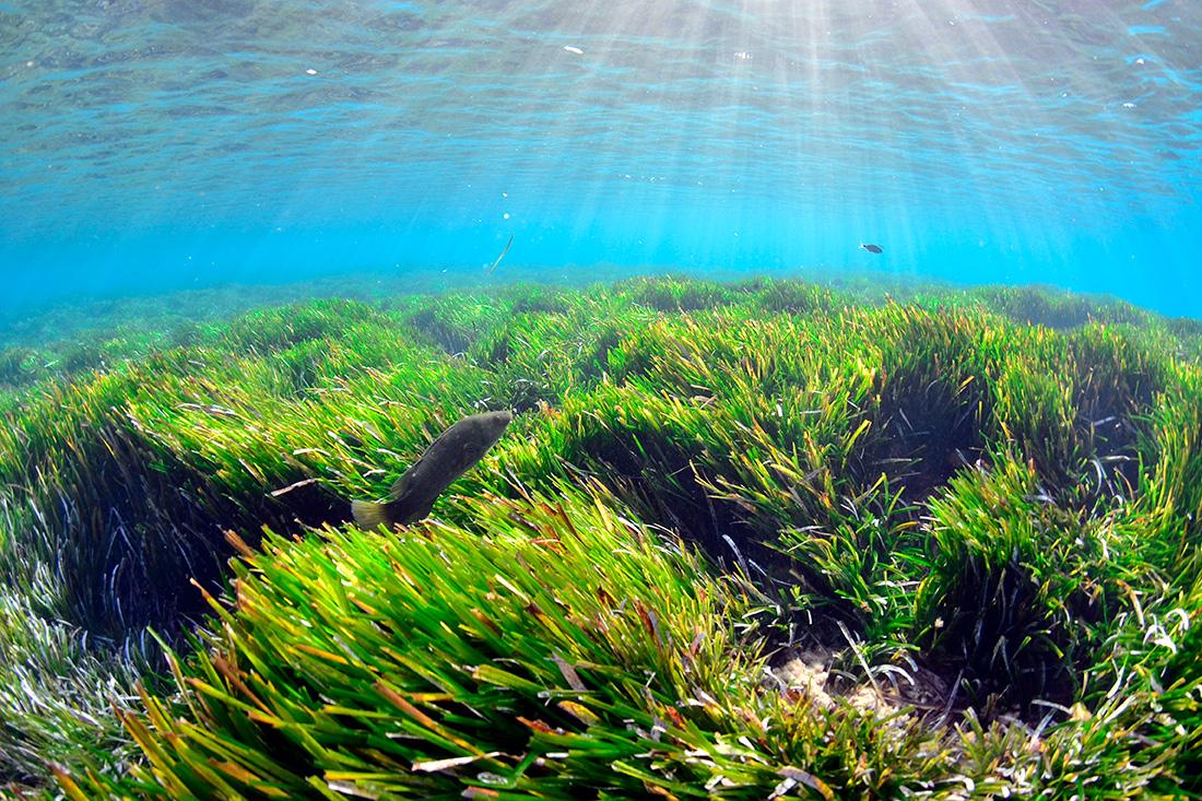 10 desitjos per a les Balears en 2030