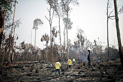 Marilles Fundation - El planeta ha perdido el 40% de capital natural en 30 años