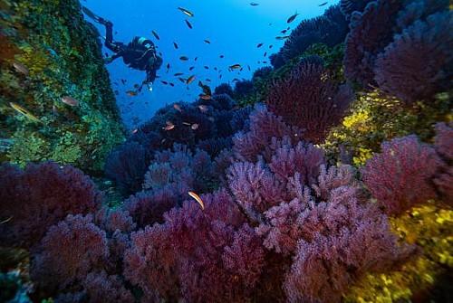 Marilles Fundation - Economics and Marine Biodiversity