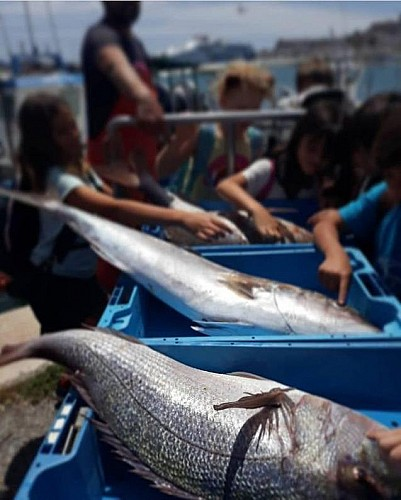 Marilles Fundation - Mallorca al plat and Stewards of the Sea – increasing demand for sustainable local food products