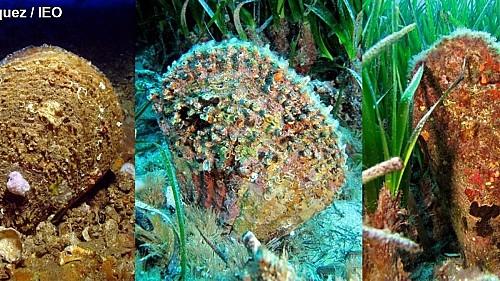 Marilles Fundation - El 45% de 40 especies de peces y crustáceos analizados han ingerido microplásticos