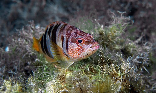 Marilles Fundation - Mallorca marine reserve boosts wildlife as well as business, report finds