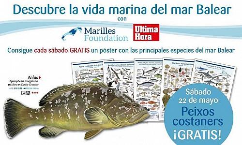 Marilles Fundation - Ultima Hora presenta: los 'Peixos costaners' de las Baleares