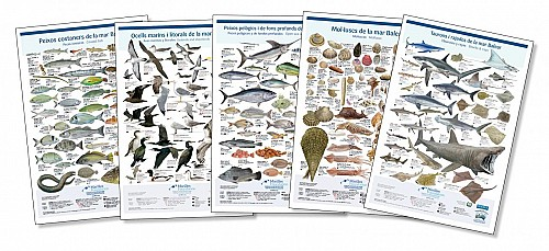 5 posters to discover the marine life of the Balearic Islands
