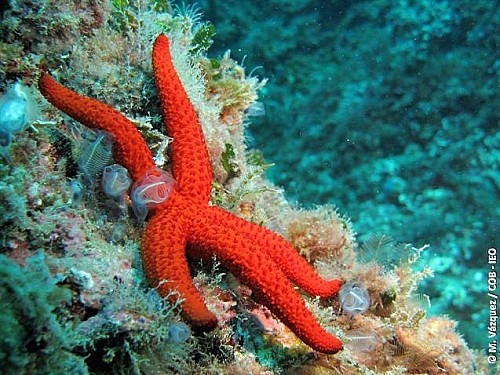 Marilles Fundation - Shedding light on the stars of the sea