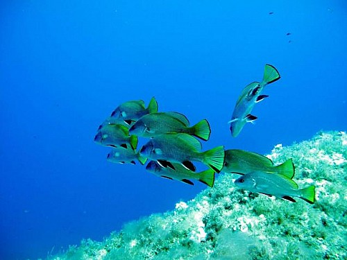 Marilles Fundation - Investing in marine protected areas pays off